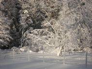 Vintertrad